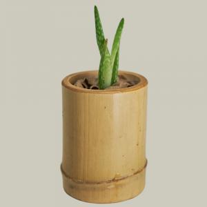 PLANT | ALOE VERA